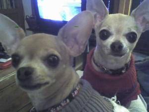 Edie & Merry (5 years)