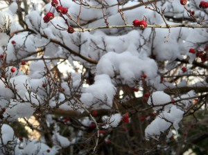 snow-berries-2