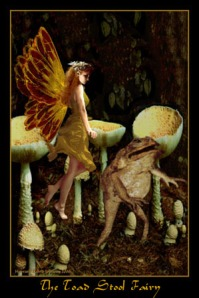 the_toad_stool_fairy
